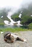 отдыхать котенка Стоковые Фотографии RF