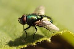 отдыхать мухы стоковое изображение