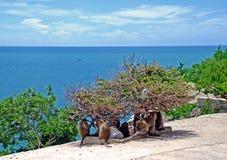 отдыхать обезьян Стоковое Изображение RF