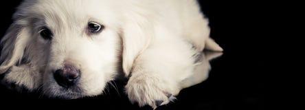 отдыхать щенка Стоковое фото RF