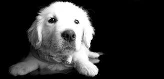 отдыхать щенка Стоковые Фотографии RF