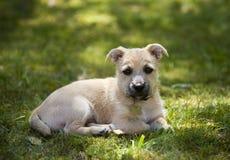 отдыхать щенка Стоковое Изображение RF
