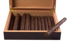 отдыхать maduro humidor сигары темный Стоковое Изображение RF