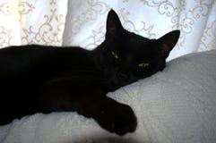 Отдыхая кот на ее часах досуга Стоковая Фотография RF