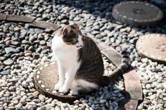 Отдых кота сидя Стоковое фото RF