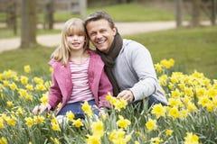 отец дочи daffodils стоковое фото