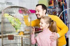 Отец и дочь возбужденные для того чтобы увидеть зеленый попугая в зоомагазине стоковые фото
