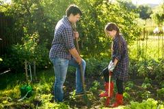 Отец и дочь окучивая сад кладут в постель с лопаткоулавливателями Стоковое Изображение RF