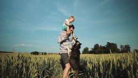 Отец и сын играя с собакой на пшеничном поле Концепция семьи Дня отца сток-видео