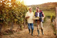 Отец и сын празднуя жмущ виноградины стоковые изображения rf