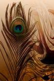 Отец павлина с абстрактным предпосылкой затеняемой коричневым цветом также вектор иллюстрации притяжки corel иллюстрация штока