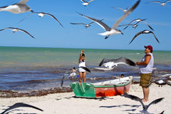 отец пляжа подавая мексиканским чайкам сынок Стоковые Изображения