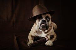 Отец собаки стоковая фотография