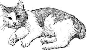 Отечественное cat Стоковые Фото