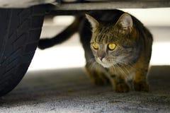 Отечественное cat Стоковое Изображение RF