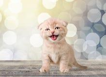 Отечественное cat Стоковые Фотографии RF