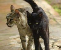 Отечественное cat Стоковое фото RF