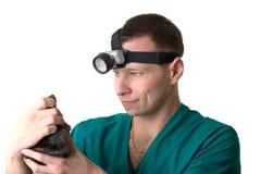 отечественно рассматривает veterinary хирурга крысы стоковое изображение