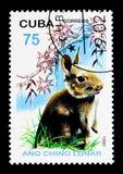 Отечественный кролик (domesticus) cuniculus Oryctolagus, год  Стоковое фото RF