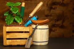 Отечественный расти кофе вокруг магазина кофейных чашек фасолей свежего Деревца кофе на таблице растущие заводы Стоковое Фото