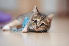 Отечественный striped котенок лежит на поле и играх Стоковая Фотография