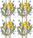 Отжатая и высушенная картина цветков лютика на белизне стоковое фото