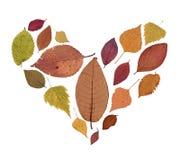 Отжатый высушенный гербарий листьев осени других цветов на белой предпосылке стоковое изображение rf