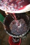отжимать виноградины стоковые фото