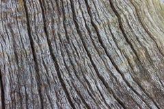 Отказы и картина мертвого дерева Стоковое фото RF