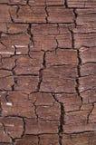Отказы на расшиве дерева стоковые фотографии rf
