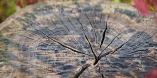 Отказы на фото деревянных тимберсов уникальном стоковое изображение