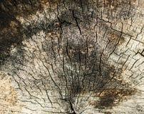 Отказ на старом деревянном пне Стоковые Фото