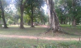 Отключение к Anuradahapura Стоковые Фотографии RF
