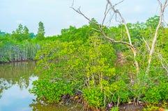 Откройте мангровы Шри-Ланки стоковое фото