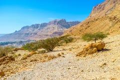 Открывать пустыни Judean стоковые фото