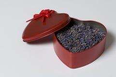 Открытая красная коробка в форме сердца с высушенной лавандой цветет Оно стоит на белой предпосылке Стоковая Фотография RF