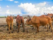 Открытие Доминиканской Республики Стоковое фото RF