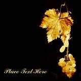 открытка виноградин Стоковые Фотографии RF