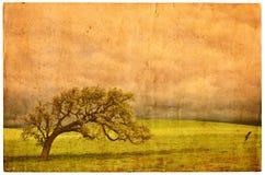 открытка дуба старая Стоковые Фотографии RF