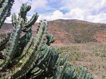 открытка Мексики Стоковое фото RF