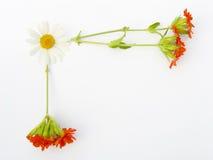 открытка поля цветов Стоковая Фотография