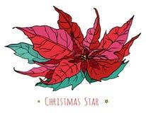 Открытка с декоративным цветком красного цвета звезды рождества Иллюстрация вектора ботаническая Стоковое фото RF