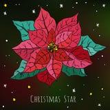 Открытка с декоративным цветком красного цвета звезды рождества Иллюстрация вектора ботаническая Стоковое Изображение RF