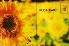 Открытка с солнцецветами Стоковые Изображения