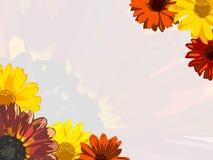 Открытка с солнцецветом и стоцветом Стоковое Фото