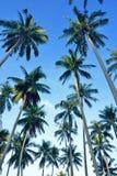 открытки ладони grunge конструкции кокоса тип старой ретро Стоковое Изображение