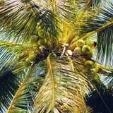 открытки ладони grunge конструкции кокоса тип старой ретро Стоковая Фотография RF