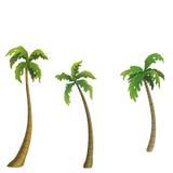 открытки ладони grunge конструкции кокоса тип старой ретро Стоковые Изображения