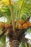 открытки ладони grunge конструкции кокоса тип старой ретро Стоковые Изображения RF