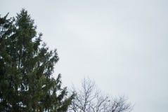 Открытое небо зимы обрамленное деревьями стоковые изображения rf